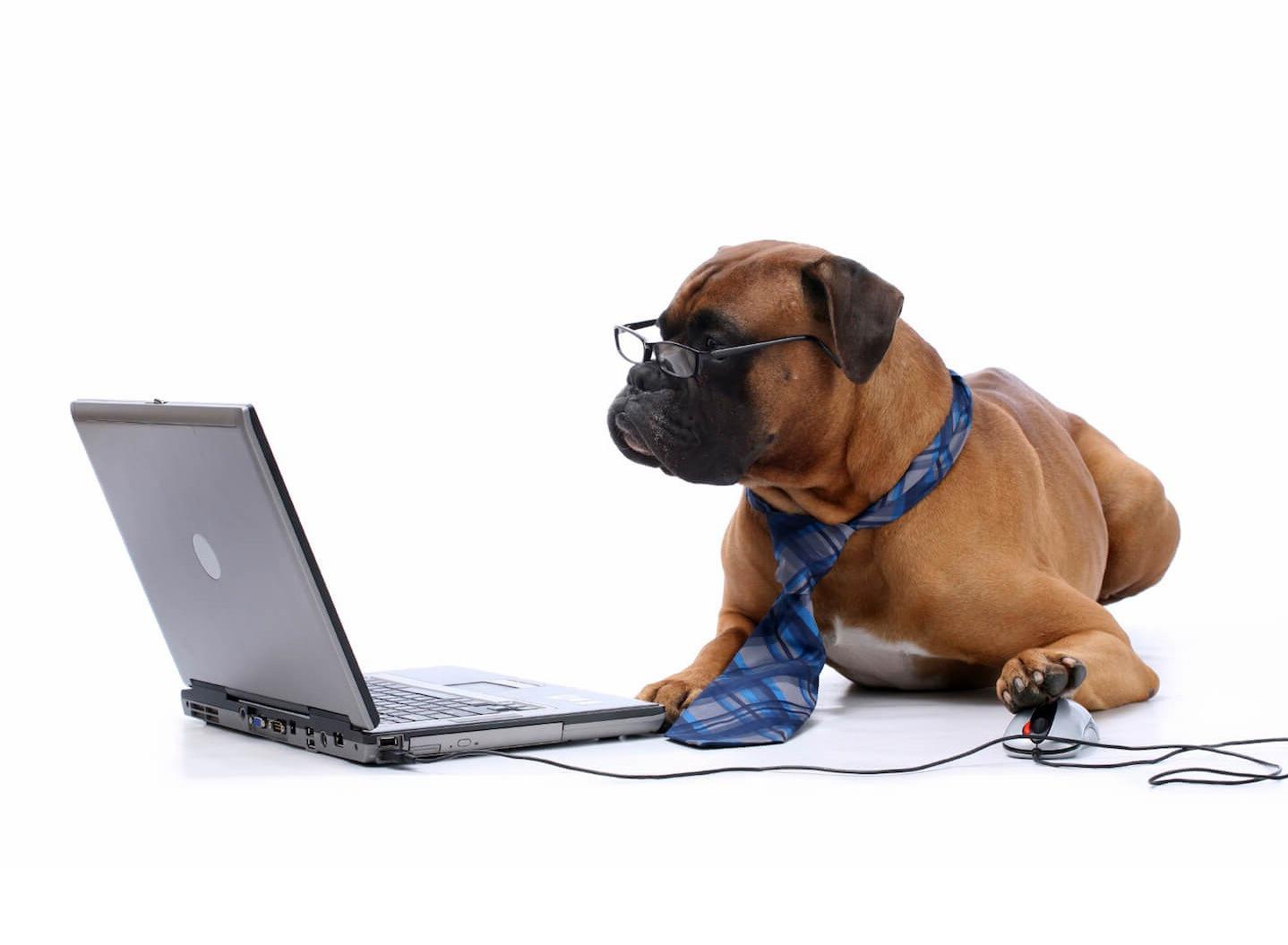 f912ab136398028b17b8d86a34d0fb8fd142a5ca_chien ordinateur